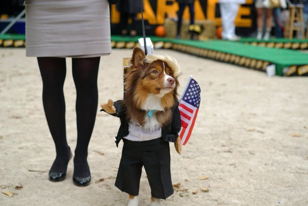 "Catch me on the ""Dogs Dressed as Donald Trump"" float. NICOLE BENGIVENO / THE NEW YORK TIMES"